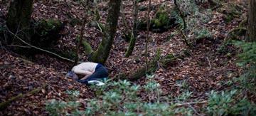 غابة اوكيغاهارا aok_bg003.jpg