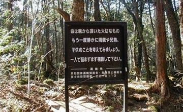 غابة اوكيغاهارا aok_bg008.jpg