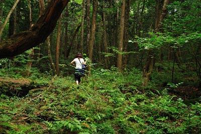 غابة اوكيغاهارا aok_bg011.jpg
