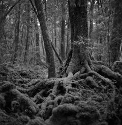 غابة اوكيغاهارا aok_bg013.jpg
