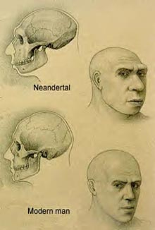 neanderthal_bg002