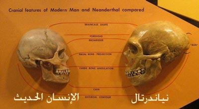 neanderthal_bg004