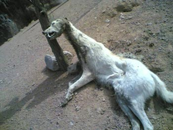 سلعوة صور السلعوة مخلوقات شرقية مرعبة السعلاة