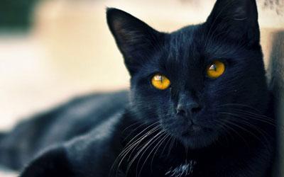 القطه السوداء في طريقي