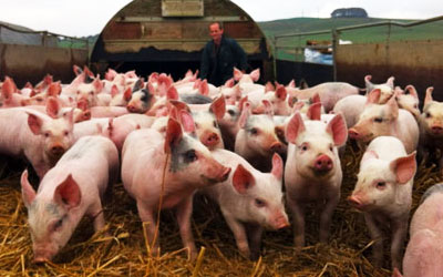 ضبط 60 حمار و11 خنزير وأحشاء حيوانات تستخدم لعمل الكفته في المطاعم