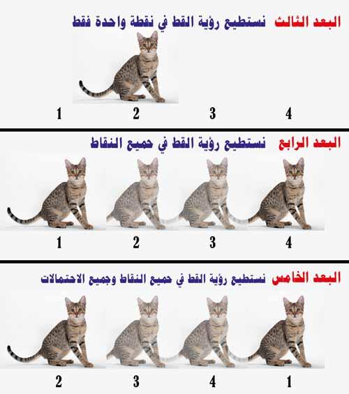 االبعد الخامس : كيف سترى القط في الابعاد المختلفة ؟