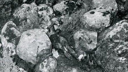 جريمة إسدال الغامضة - ملف الجاسوسية السري