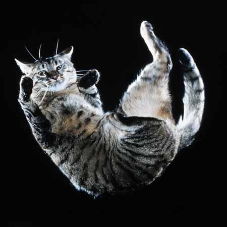 عالم القطط المذهل