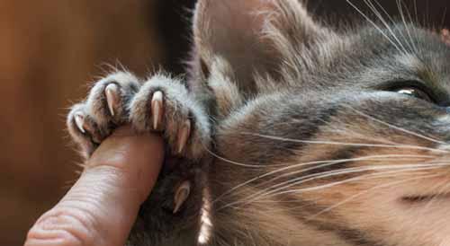 معلومات مخيفة ومدهشة عن القطط