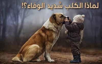 الكلاب هي بنات عم الذئاب .. لماذا هي غير مفترسة؟