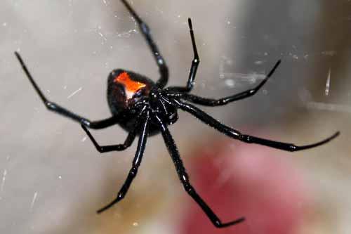 8 من اخطر الحشرات في العالم!