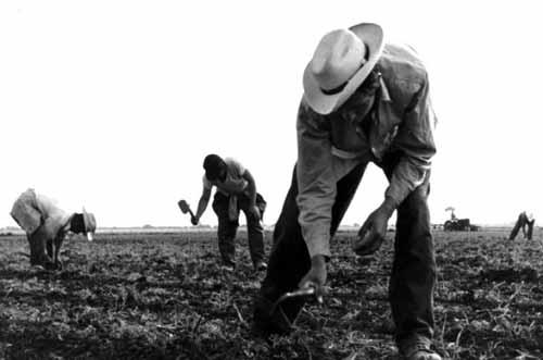 القصة الحقيقية والبشعة لمزرعة عبيد تكساس