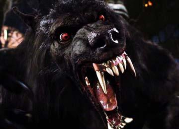 ما لا تعرفه عن المستذئبين