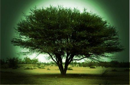 أساطير .. من الفلكور الشعبي اليمني